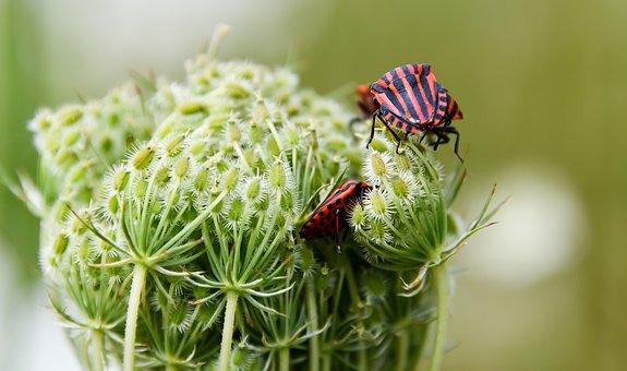 Insect, Shield Bug, Flower, Buds, Bug, avocado tree pest