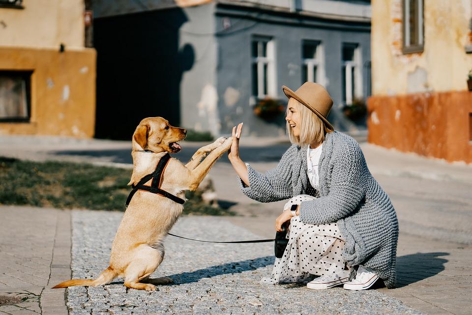 Dziewczyna, Pies, Pet, Przyjaźń, Pomocnik, Właściciel