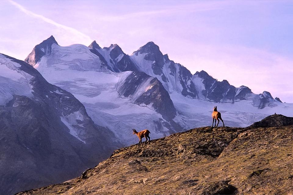 Núi, Sơn Dương, Alps, Ý, Valle D'Aosta, Gran Ý