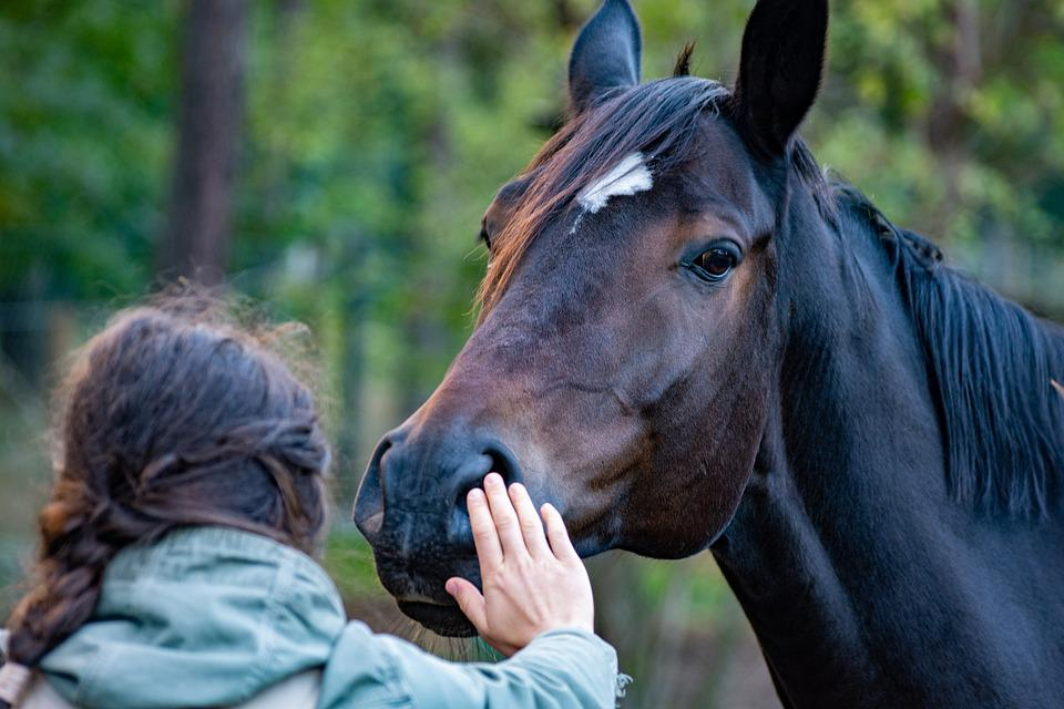 Horse, Hand, Friendship, Contact, Stroke, Mane, Equine