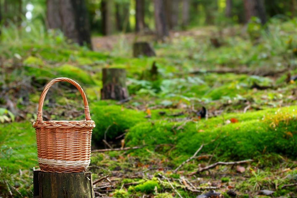 Как не потеряться в лесу. Советы грибнику