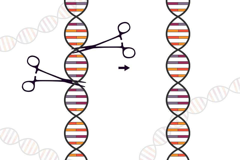Crispr, Genetic, Scissors, Dna, Biology, Science