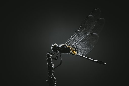 Dragonfly, Insect, Wings, Winged