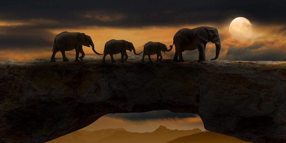 象, 動物, ブリッジ, 哺乳類, 野生動物, ロック橋, 自然の架け橋, 泊, 夜, 暗い, 月, 自然