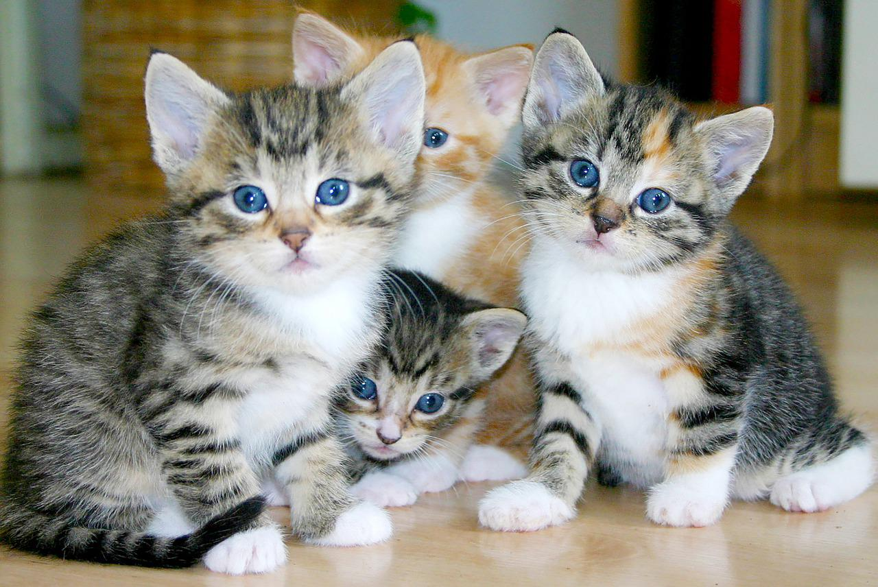 Kittens Cats Group Of - Free photo on Pixabay