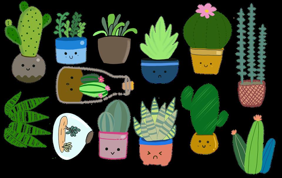 Tanaman Kaktus Succulents Pot Gambar Gratis Di Pixabay
