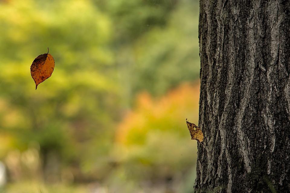 Tree, Fall, Leaves, Tree Trunk, Bark, Trunk