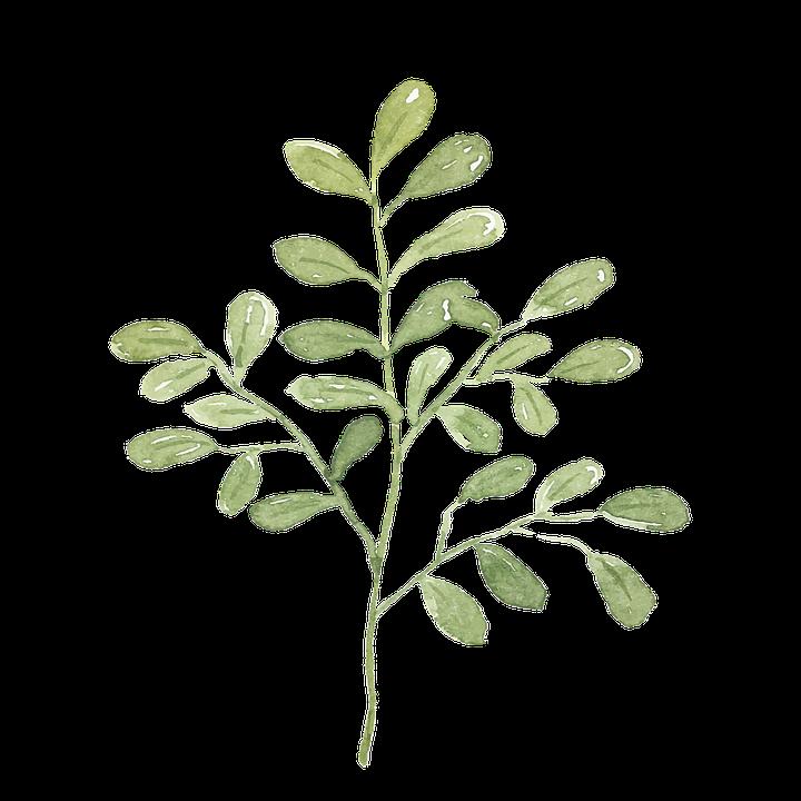 葉 植物 水彩画 Pixabayの無料画像