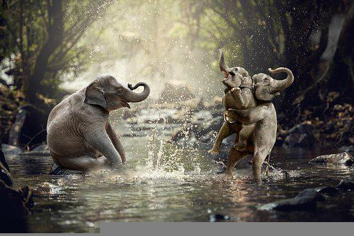 Elephants, River, Trees, Forest, Fun