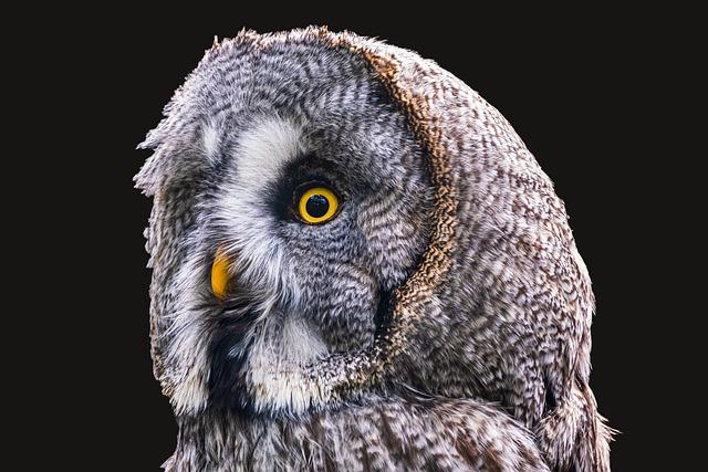 Bart Owl Bird Animal Owl