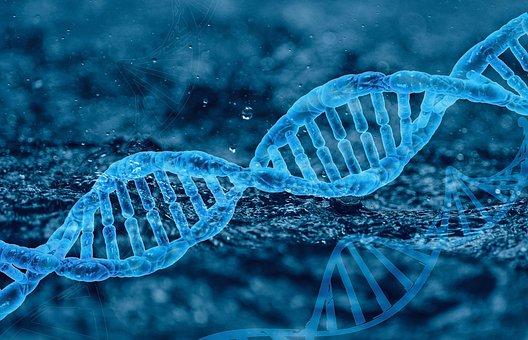 Dna, Human Genetics, Molecule, Biology
