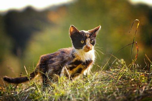 Cat, Kitten, Pet, Kitty, Young Cat