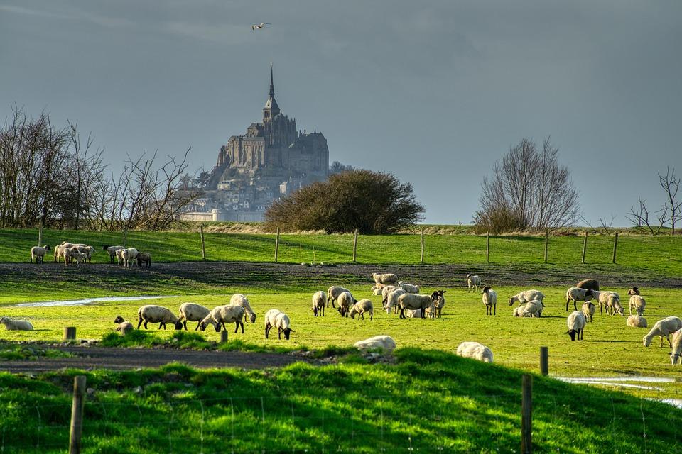 Sheep, Lamb, Cattle, Pasture, Church, Monastery