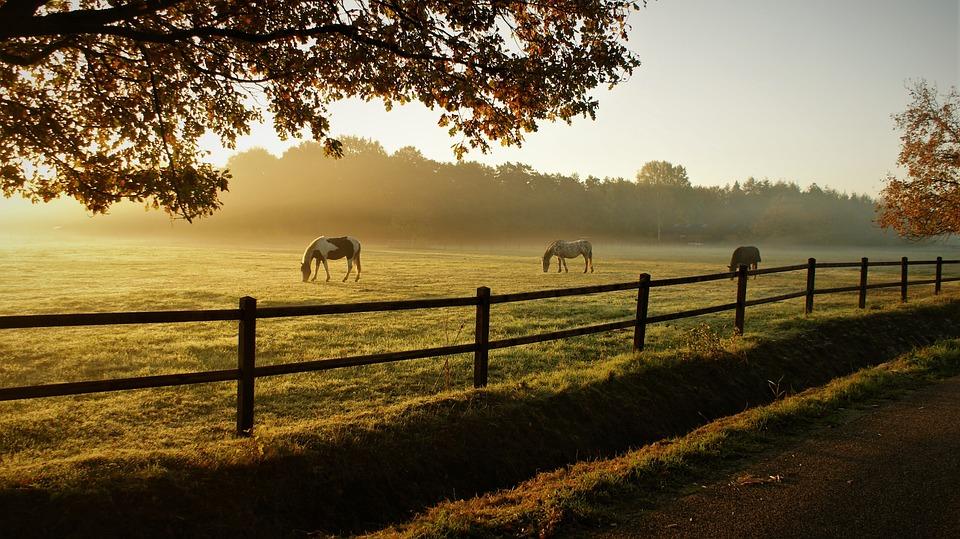 馬, 放牧, 牧場, 日の出, 動物, 哺乳類, 朝, 牧草地, 草地, 霧, ミスト, フィールド