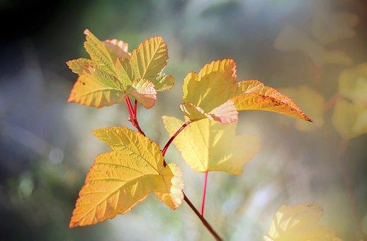 葉、葉、植物、低木、小枝