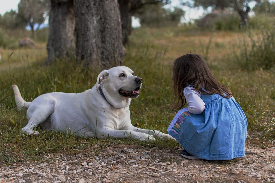Dziecko, Pies, Na Zewnątrz, Mała Dziewczynka