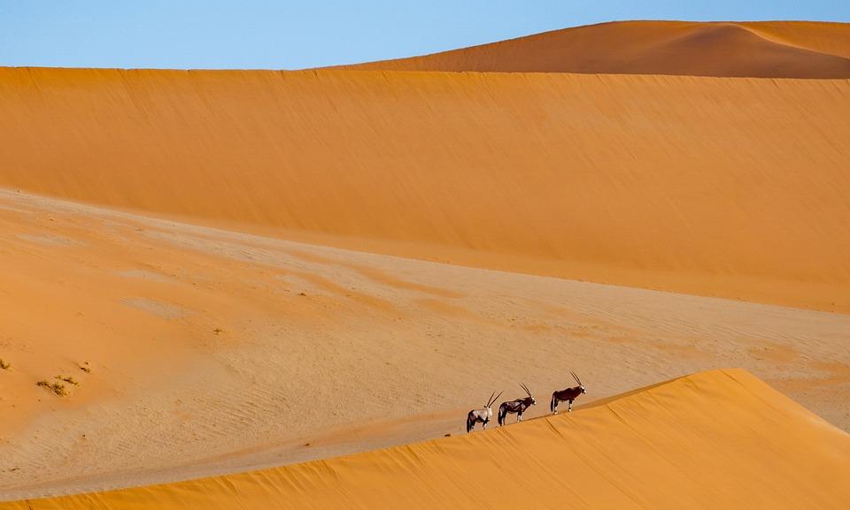 https://cdn.pixabay.com/photo/2020/11/07/10/24/desert-5720527_960_720.jpg