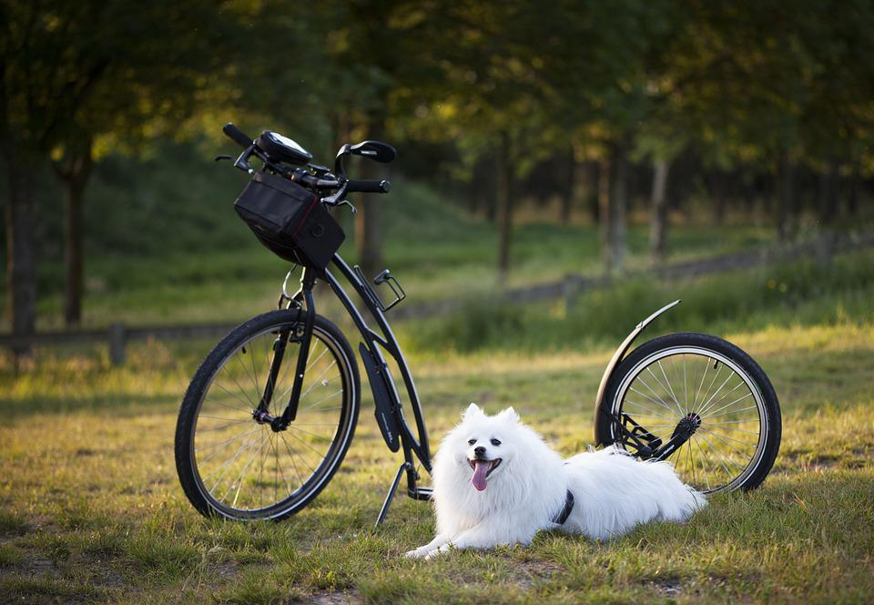Hond, Scooter, Fiets, Wielen, Sport, Ontwerpresolutie