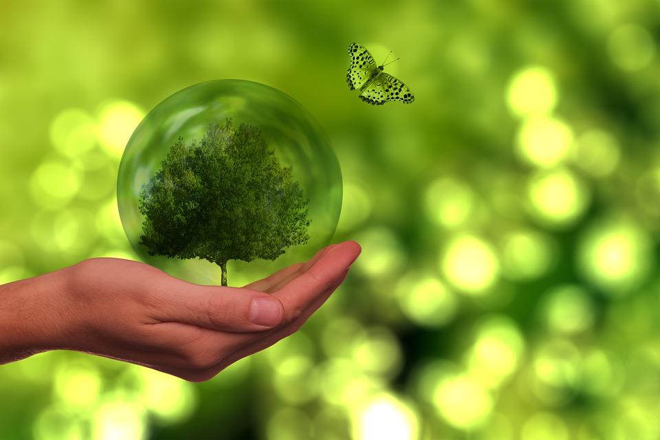 Árbol, Mariposa, Mundo, Energía, Sostenibilidad