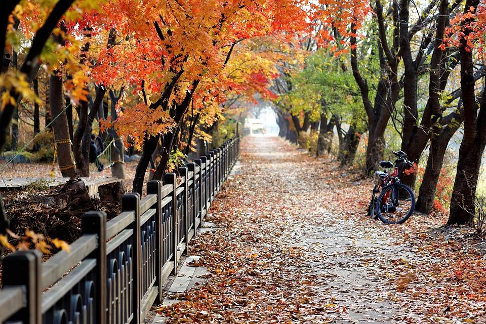 Blätter, Weg, Straße, Fahrrad, Park, Bäume