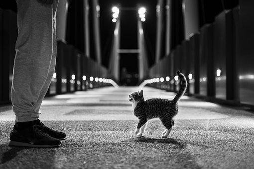 猫, 子猫, 通り, ネコ, 哺乳動物, 動物, ペット, ハローキティ
