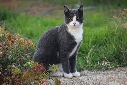 cat-5753752__340.jpg