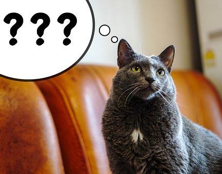 猫, 吹き出し, クエスチョン マーク, ペット, 動物, 国内の猫, ネコ