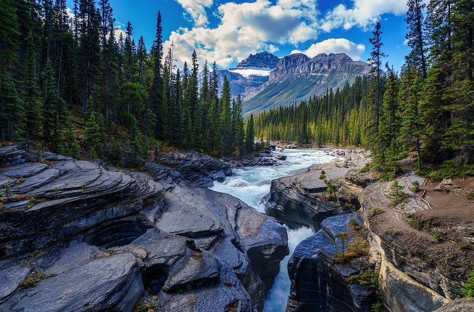 川, 岩, 木, 針葉樹, 石, 小川, 針葉樹の, 林, 森林, 山, 風景, 自然, 峡谷