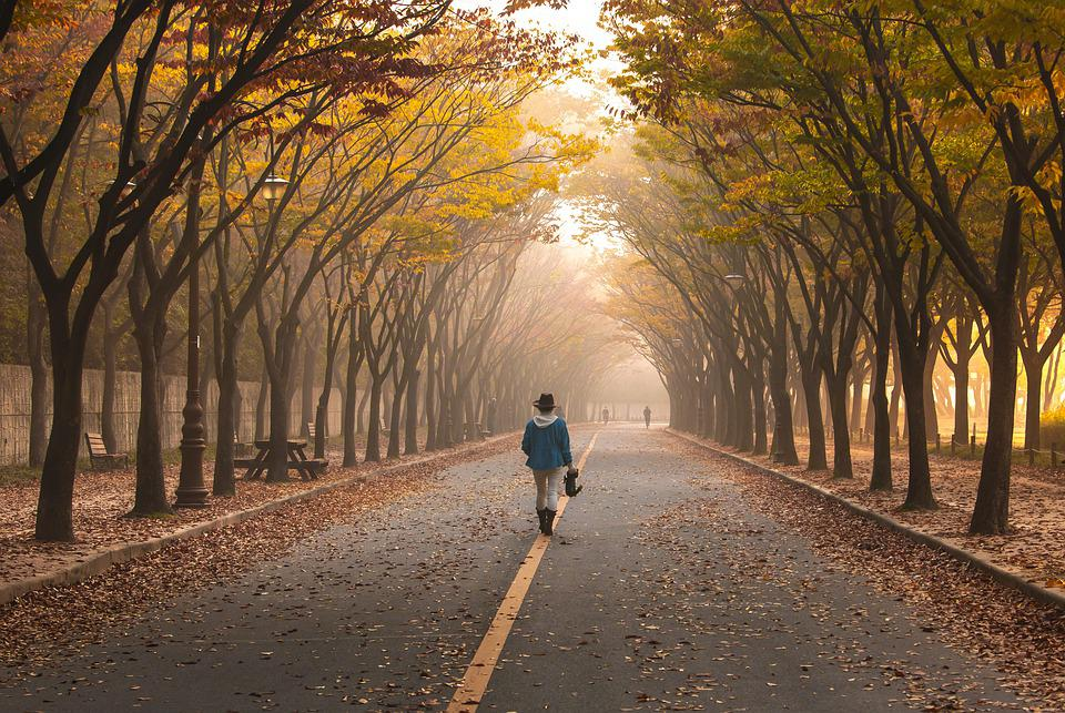 Road, Girl, Trees, Walk, Fog, Pavement, Walking, Woman