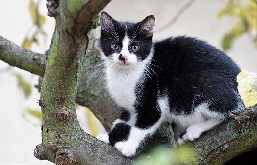 Kitten, Cat, Feline, Pussy, Branch, Tree