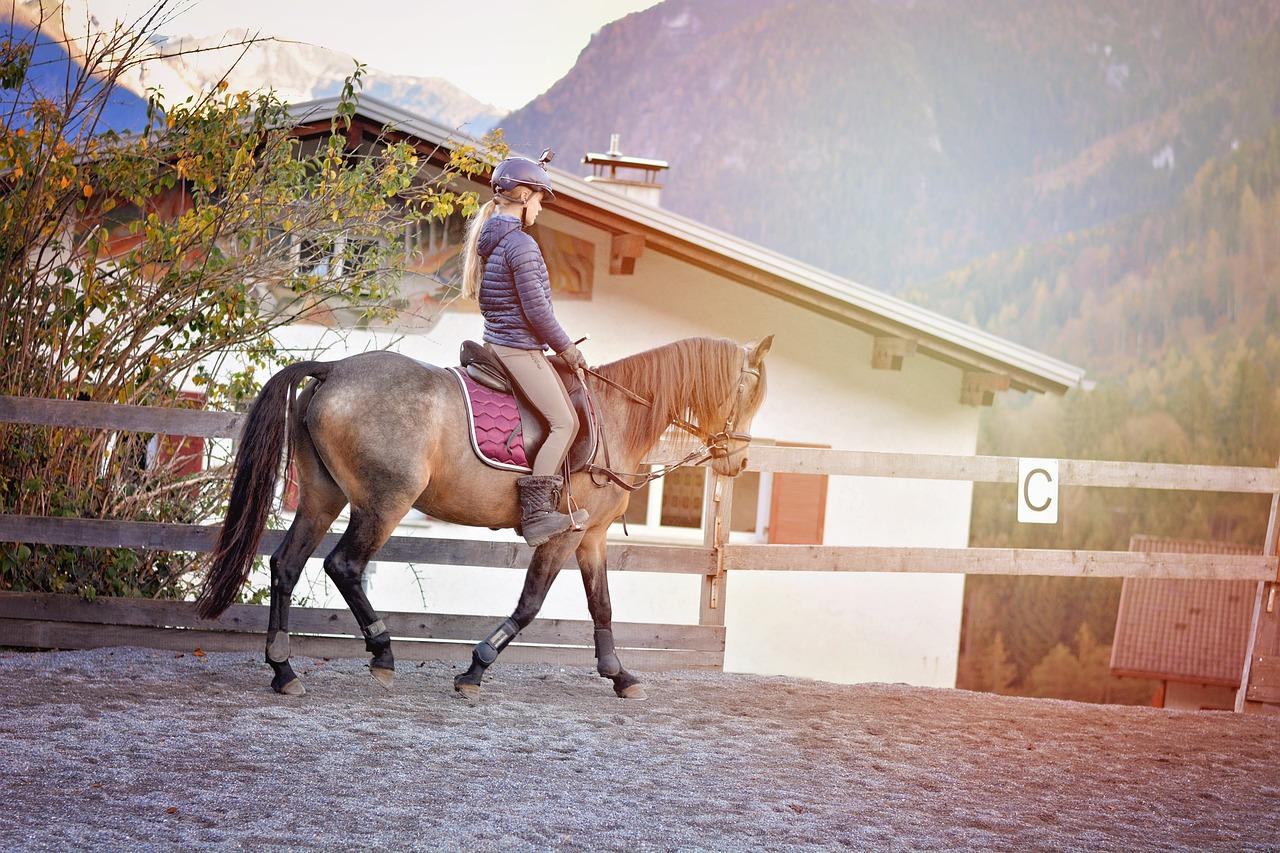 Pony Horse Riding - Free photo on Pixabay