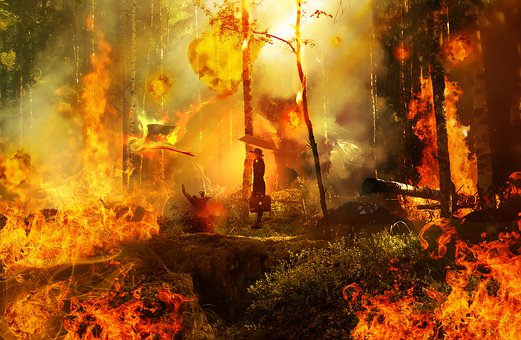 600+ Free Forest Fire & Fire Images - Pixabay