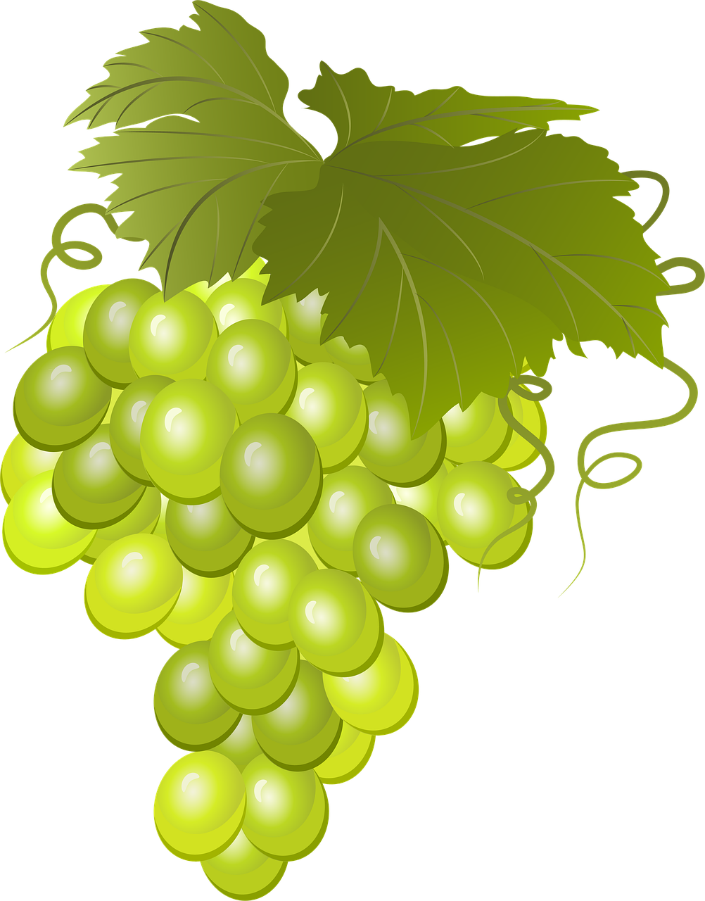 Grapes Bunch Of Vine Green - Free image on Pixabay