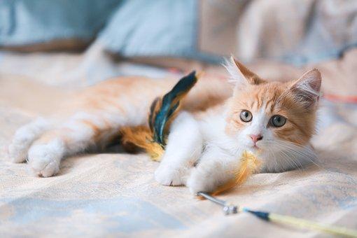 猫, 子猫, オレンジ色の猫, 肖像画, 猫の肖像, 虎猫, オレンジタビー