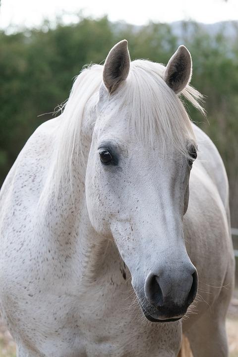 Australia Pony Kuda Hewan Binatang Foto Gratis Di Pixabay