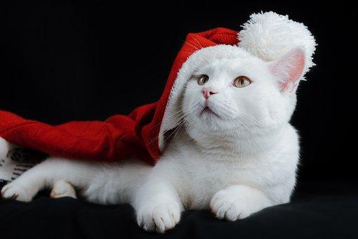 Cat, Hat, Christmas, Santa, Holiday