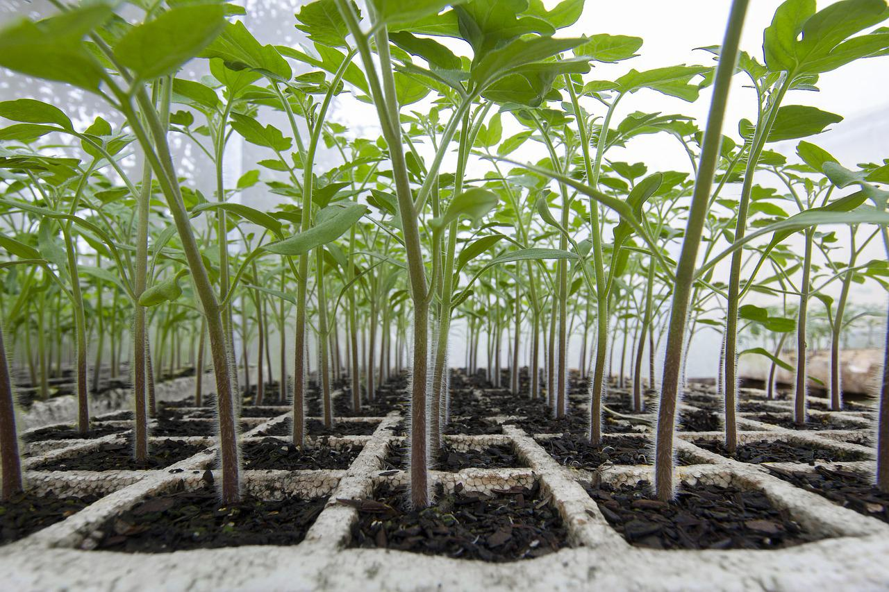 Farm Tomato Organic - Free photo on Pixabay
