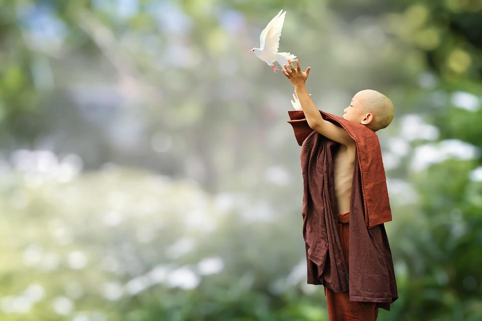 仏教, 修道士, 初心者, 鳥, リリース, 愛する優しさ, 慈悲の瞑想, 自由, Samanera