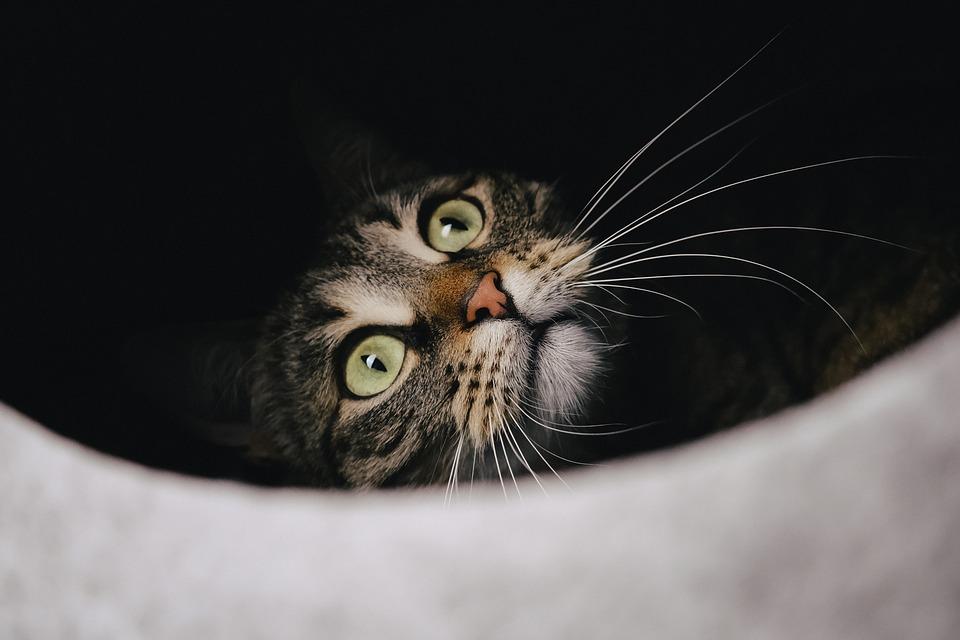 https://cdn.pixabay.com/photo/2020/12/22/12/38/cat-5852139_960_720.jpg