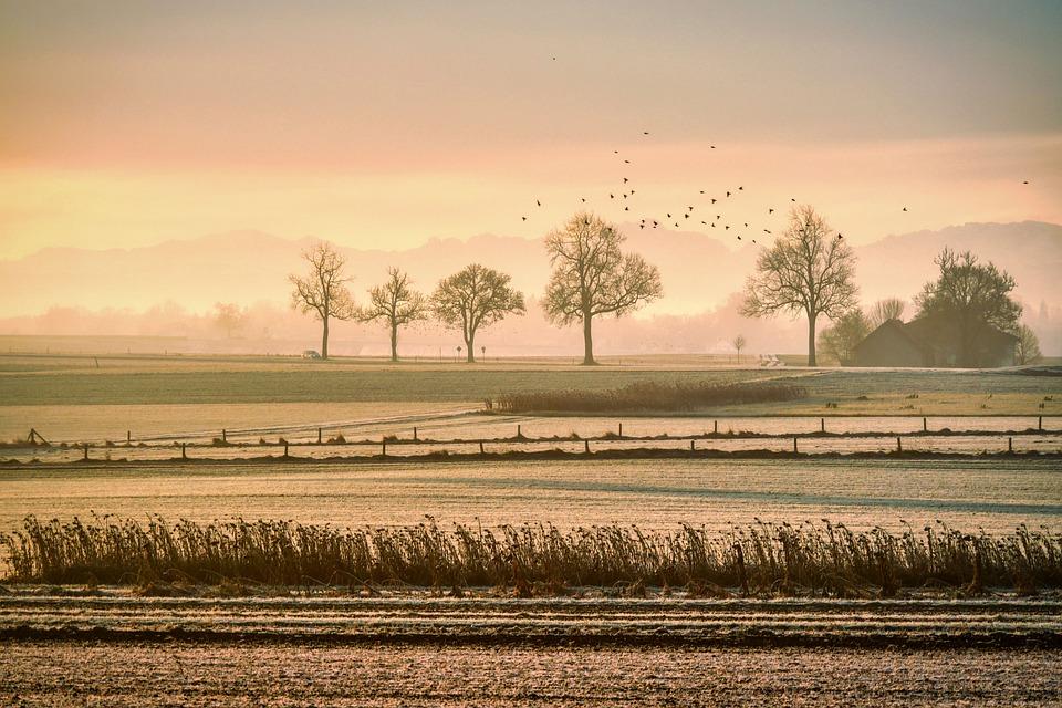 Grasland, Mist, Vogels, Gras, Gebied, Weide, Hek