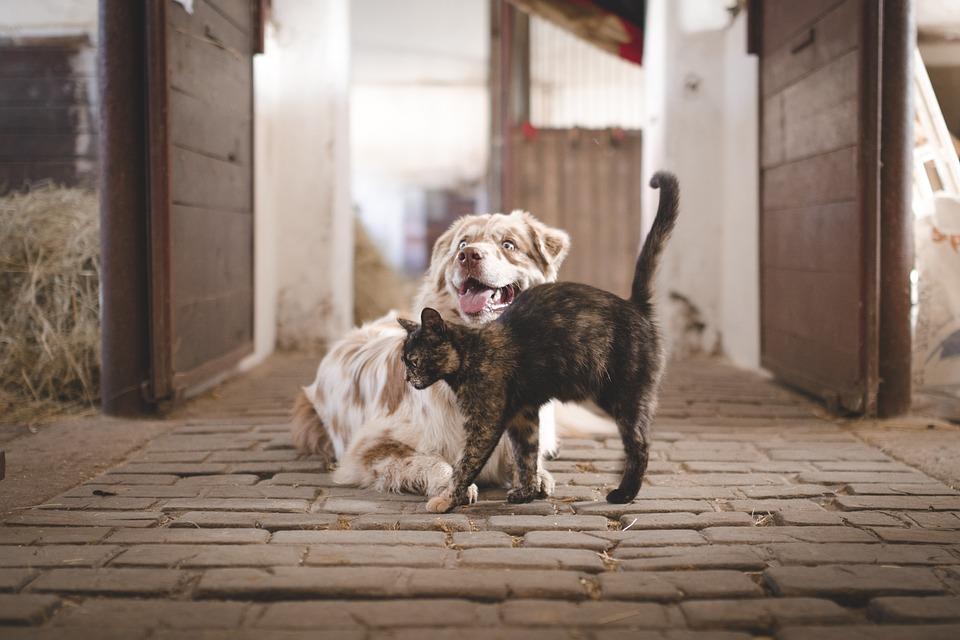 Dog, Cat, Pets, Domestic, Stable, Friends, Farm