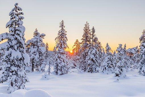 Zima, Jehličnany, Západ Slunce, Sníh
