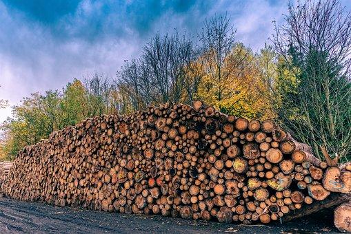 Tree Trunks, Sky, Log, Nature, Tree