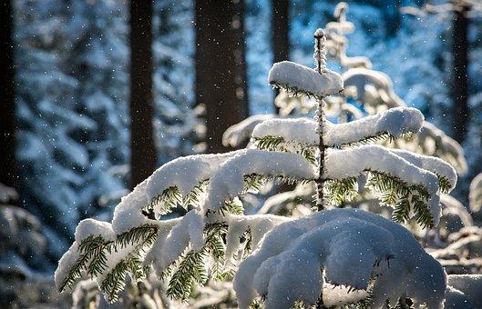 降雪, モミ, 木, 雪, 霜, 雪の, 冬, 雪に過ぎました, 森林