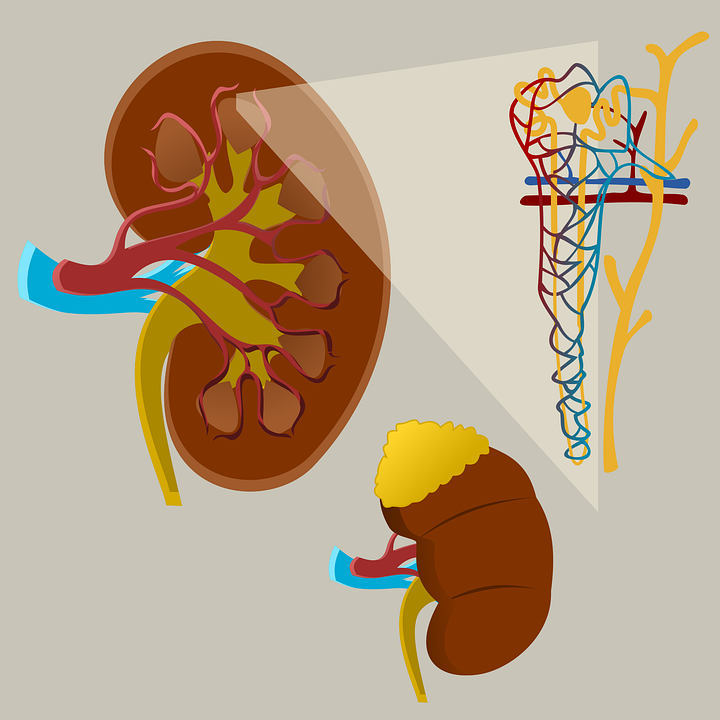 Kidney Failure, Symptoms, Complications and Preventions