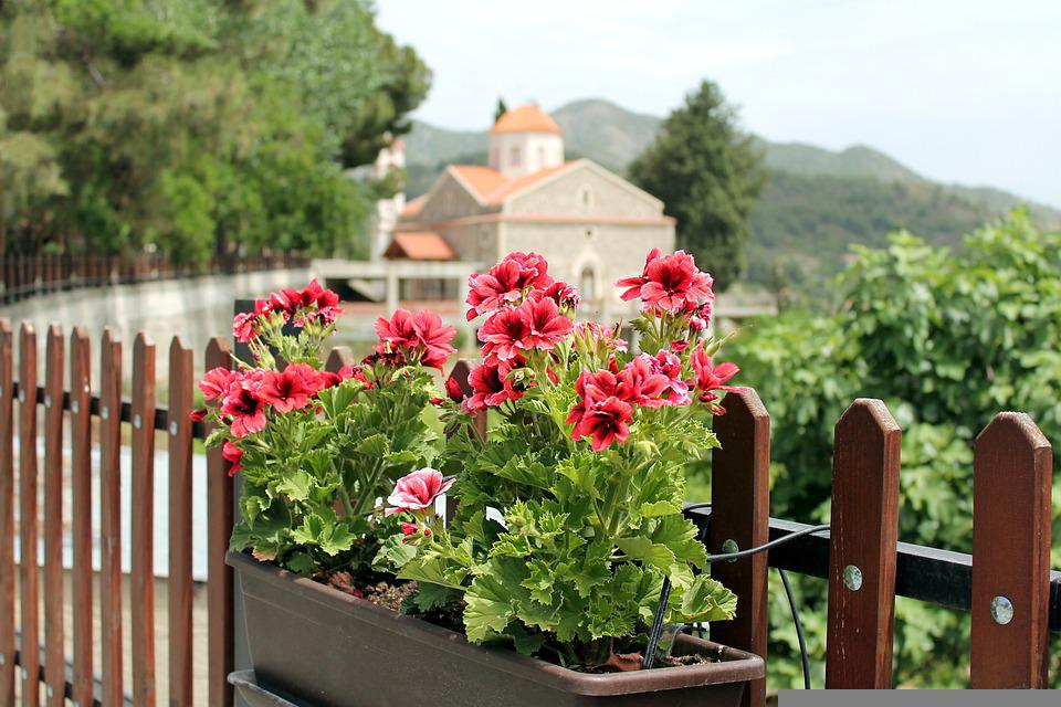 Flowers, Petunias, Cyprus, Village, Years, Church