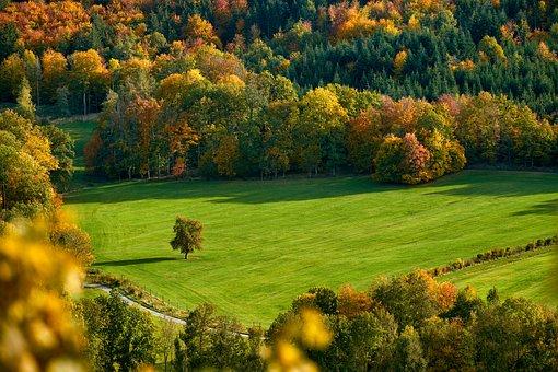 Field, Trees, Fall, Autumn, Mood