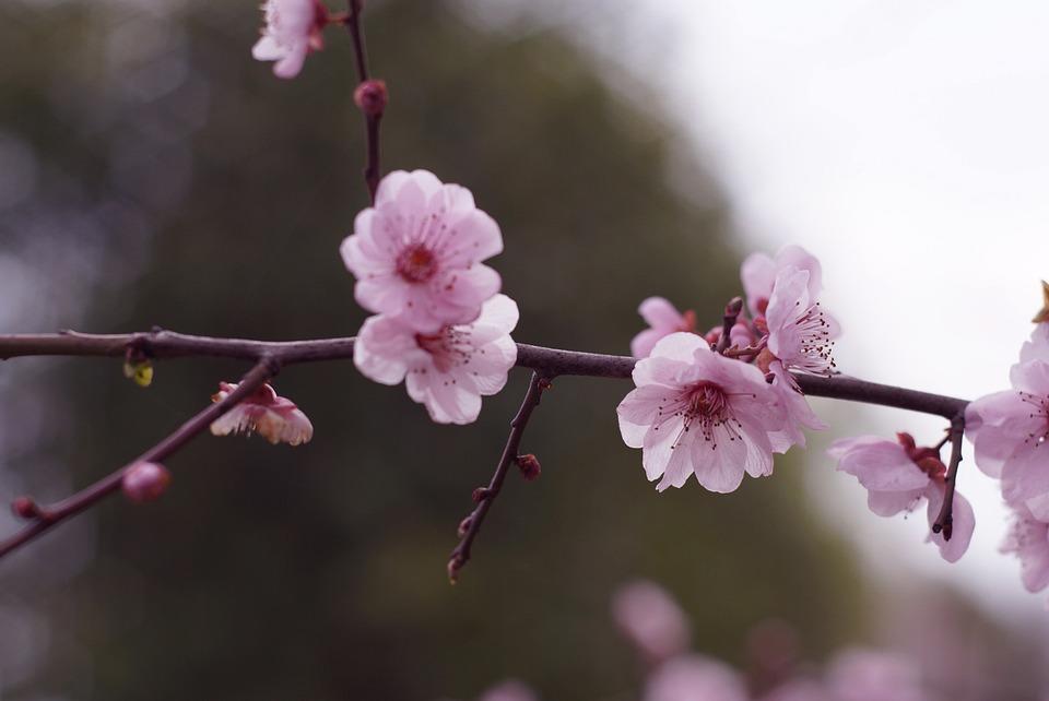 Розовые Сучки