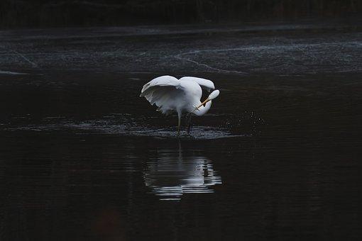 Heron, Hern, Fish, Bird, Lake, Avian