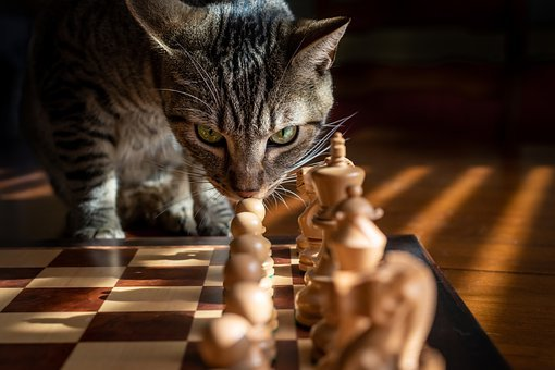 Tabby, Cat, Chess, Game, Strategy, Pet